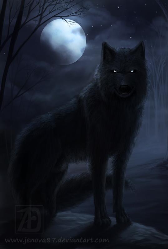 Črna volkulja