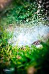 Grass Splash macro