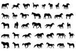 Image pack horses brushes.