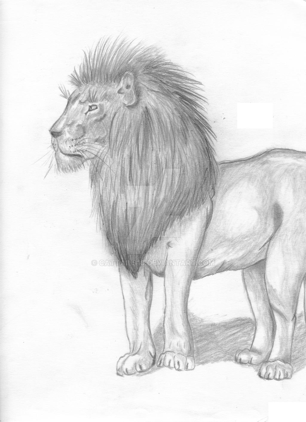 Lion Full Body By Cattails10 On Deviantart