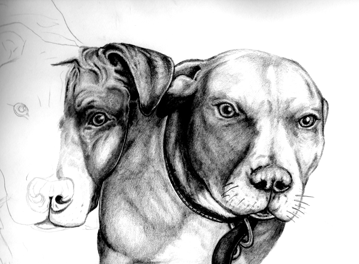Pitbulls half  complete by Tyler007