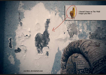 Llama on the wall by ANC4DES