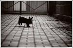 Rabbit hop hop by Doroty86