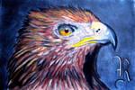 Free Bird....... by RealityBitez