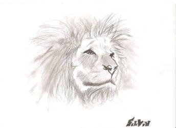 Lion by Brebenel-Silviu