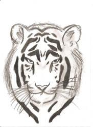 Tiger Sketch by Brebenel-Silviu