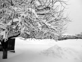 Frozen Tree by Brebenel-Silviu