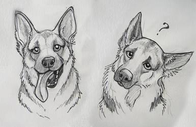 German Shepard sketches