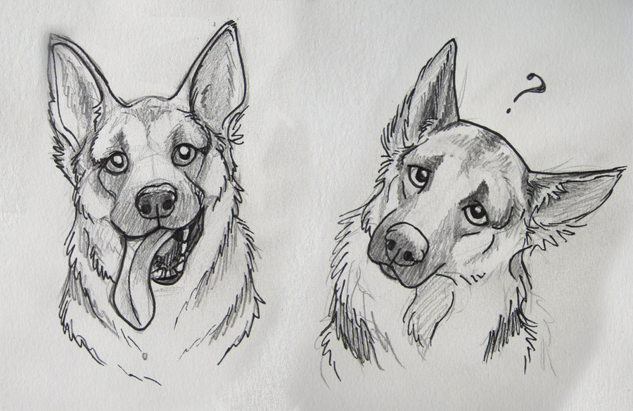 Naschi 1422 32 german shepard sketches by marlynxtlk
