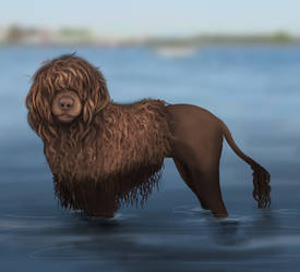 Portuguese water dog by marlynxTLK