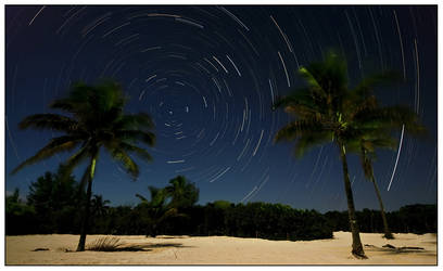 Star Trail palm tress by bandesz99
