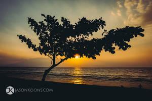 Deep Cuts | Maui by JasonKoons