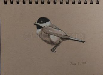 Little Bird by LilithDay
