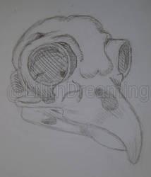Owl skull by LilithDay
