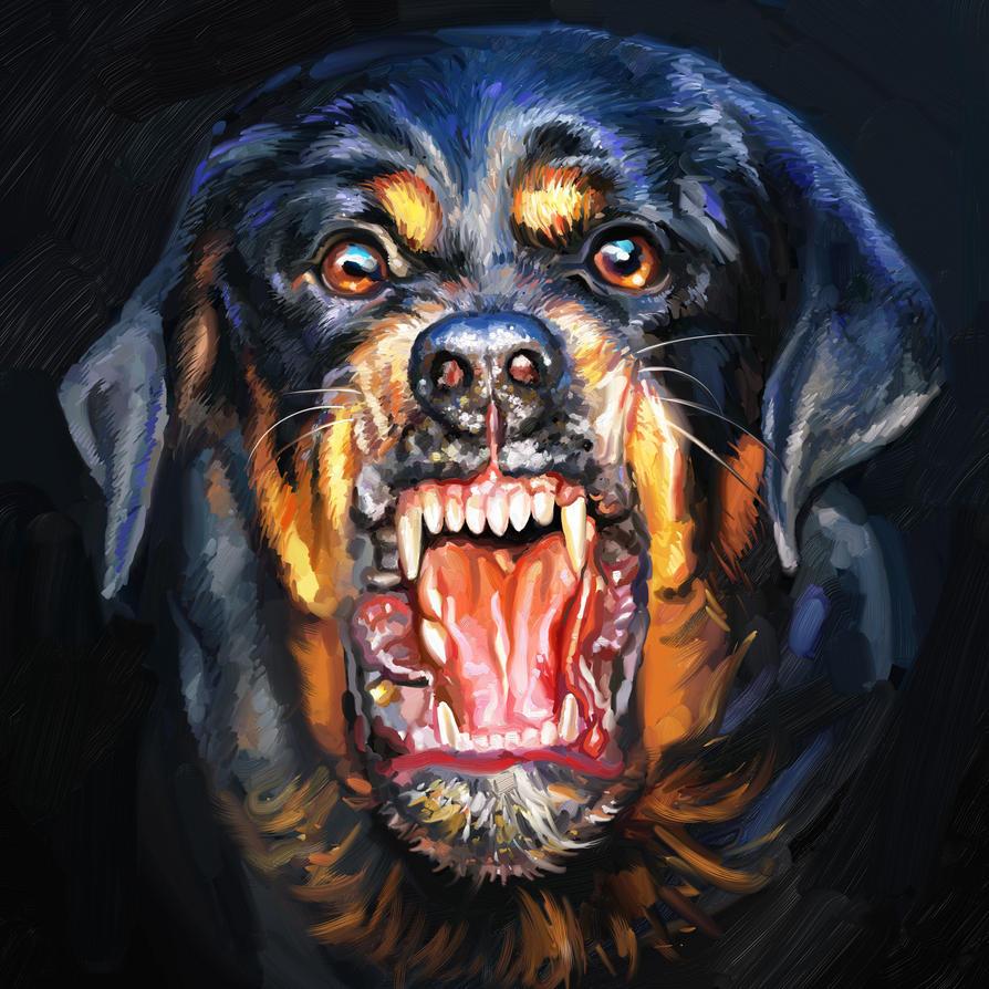Rottweiler by gfaruque