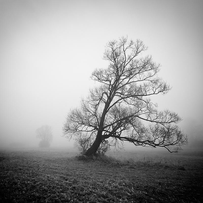 Portrait of the tree VIII by EmilStojek