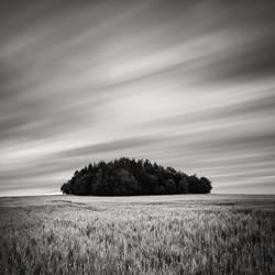 Tree Island by EmilStojek