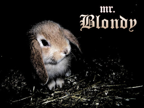 Blondy Bunny by muybonbon