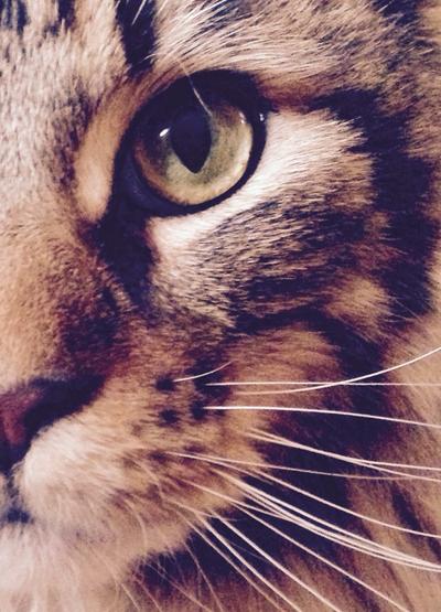 Mars the cat by muybonbon