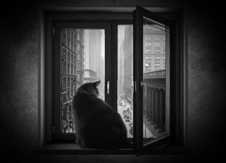 Cat on the window by koshechkazlatovlaska