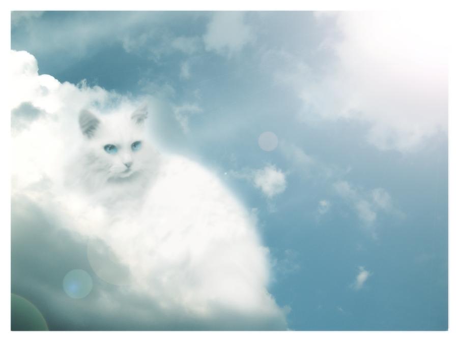 White cat by koshechkazlatovlaska