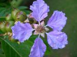 Belize Flower by numapompilius