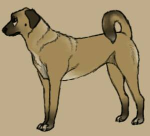 Dog Study #6- Chip by TheWolfLover2003