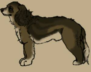 Dog Study #9- Cocoa by TheWolfLover2003