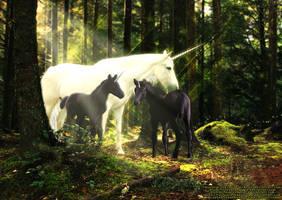 Unicorns. by anoriel19
