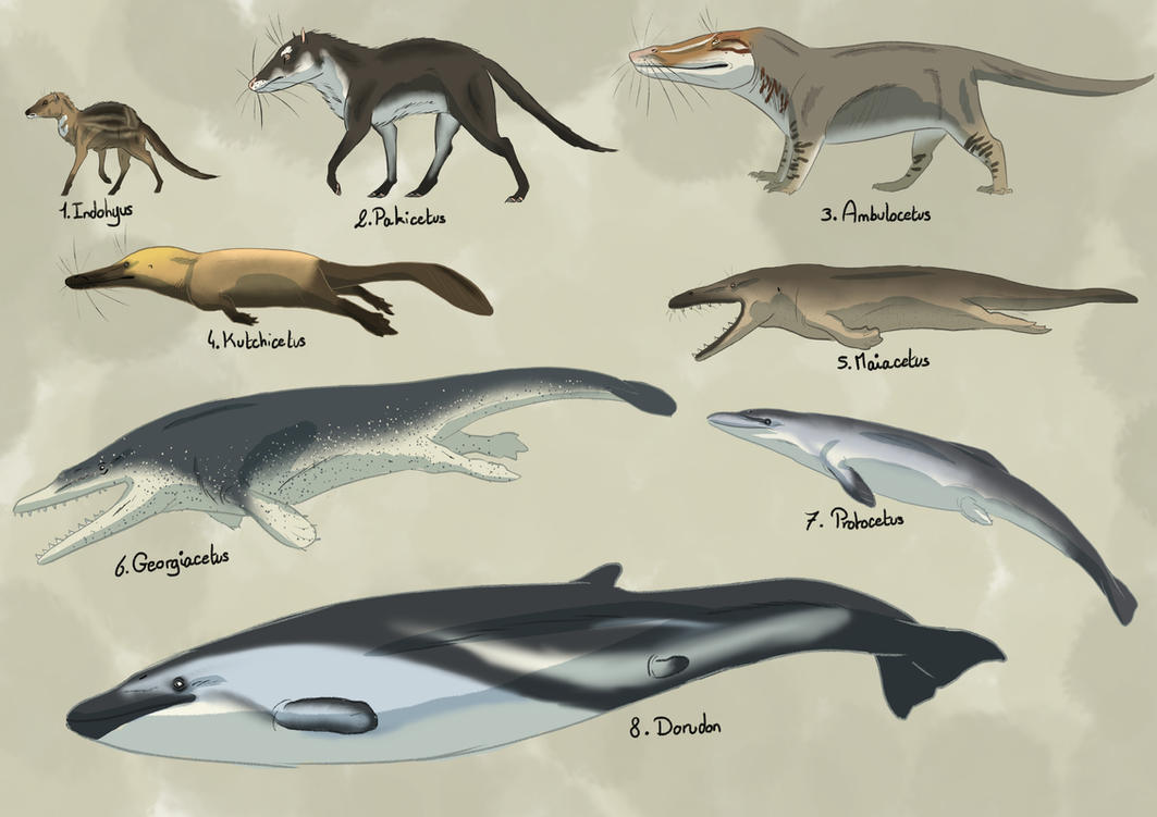 an essay on the evolution of whales When we investigate whale evolution from a non-whale ancestor, the problems seem as enormous as the creatures themselves in 1982, a british science writer and evolutionist said.