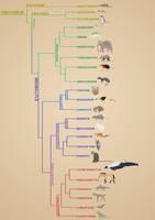 Mammals phylogeny by Rainbowleo