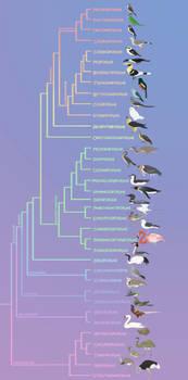 Birds phylogeny (updated)