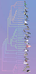 Birds phylogeny (updated) by Rainbowleo