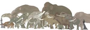 Elephant evolution by Rainbowleo