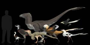 Totally random dromaeosaurids