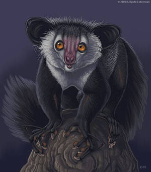 Painter Aye-aye