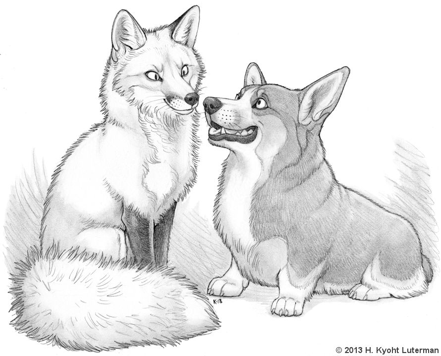 Fox and corgi by kyoht on deviantart for Cool fox drawings
