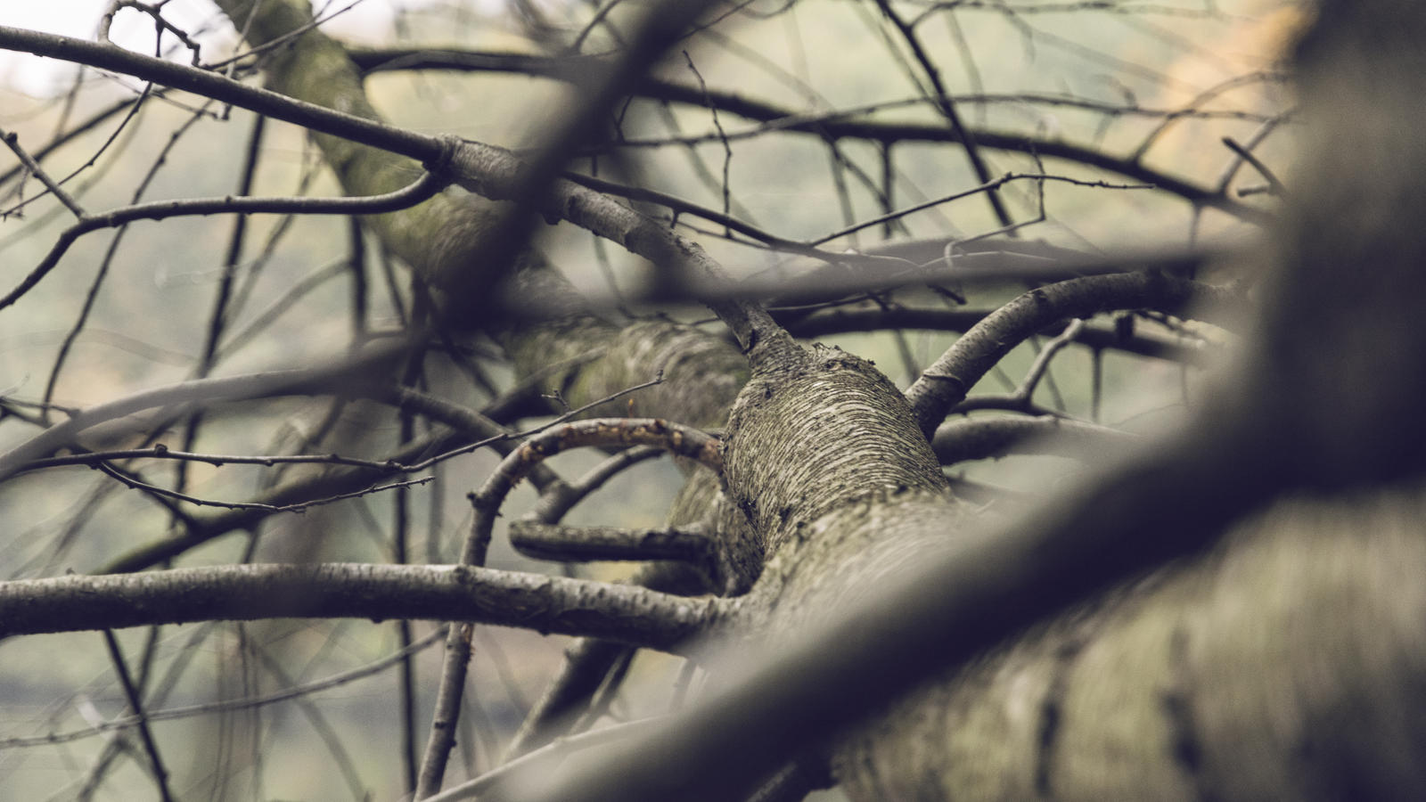 Branched by j-heuer