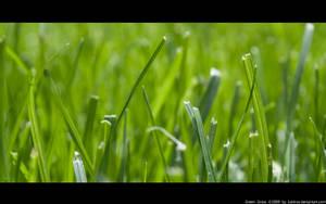 Green Grass by Kaldrax