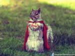 SuperSquirrel - The Last squirrel of Krypton