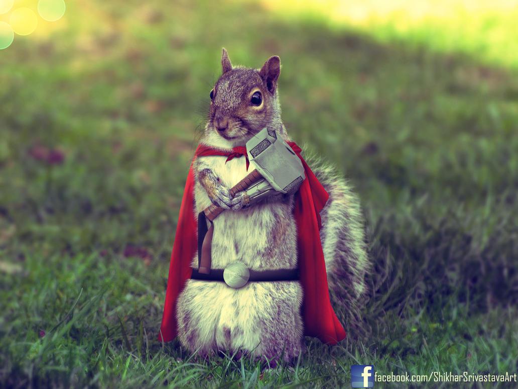 Thor Squirrel by ShikharSrivastava