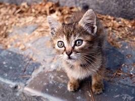 kitty_5 by DaniNiemand