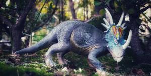 Styracosaurus...