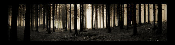 forest x