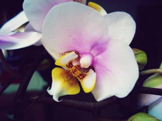 Blooms of Love by BlondeKatastrophe