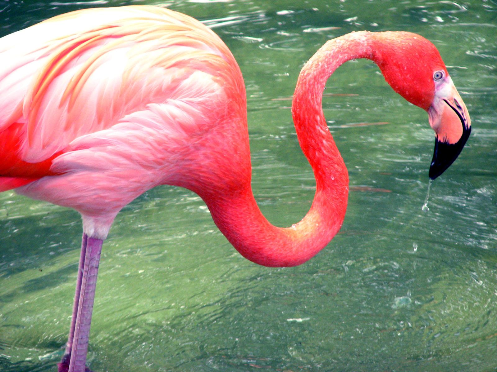 Flamingo I by MoonLitNostalgia