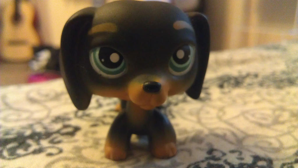 Rare Dog Colors my Rare Lps Dog by