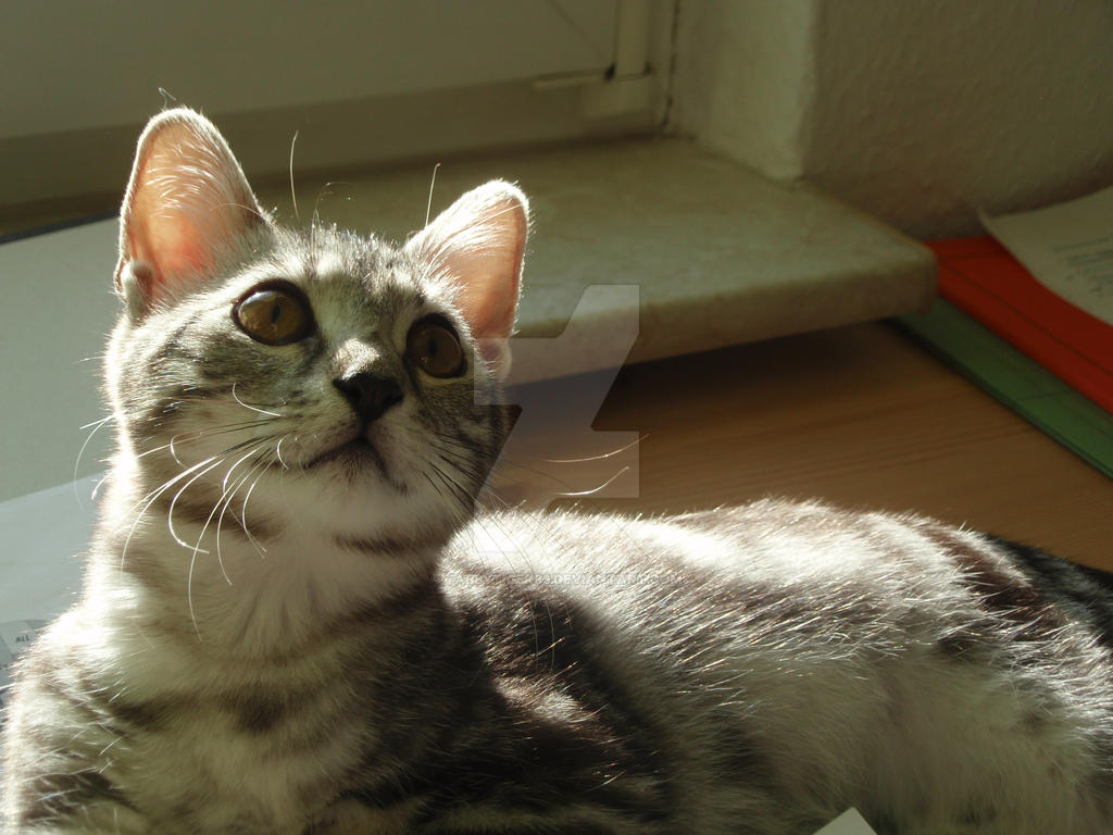 Feline Princess by tabbytiger93