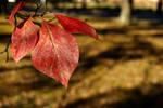 Season's a-changin' by Cojaro