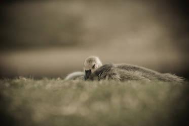 Sleeping Fuzzy by Cojaro